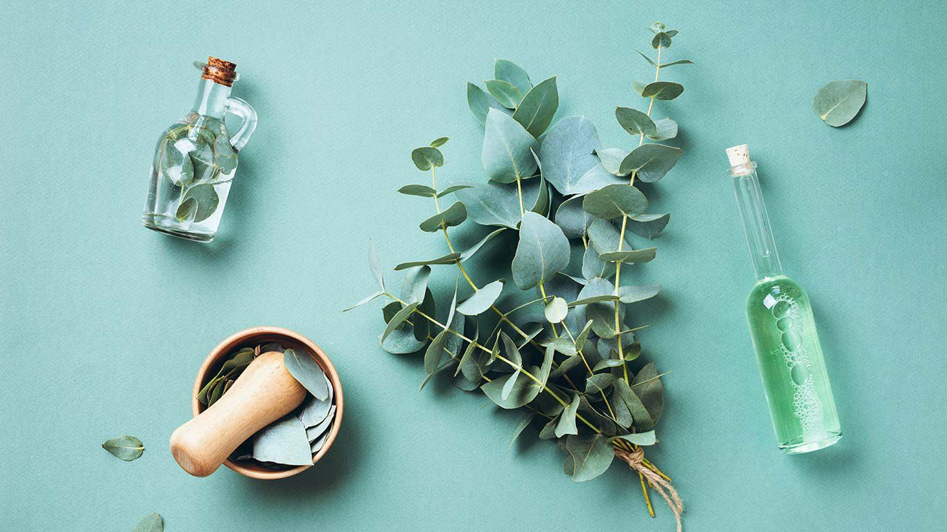 Flatlay von Eukalyptus auf türkise Hintergrund.