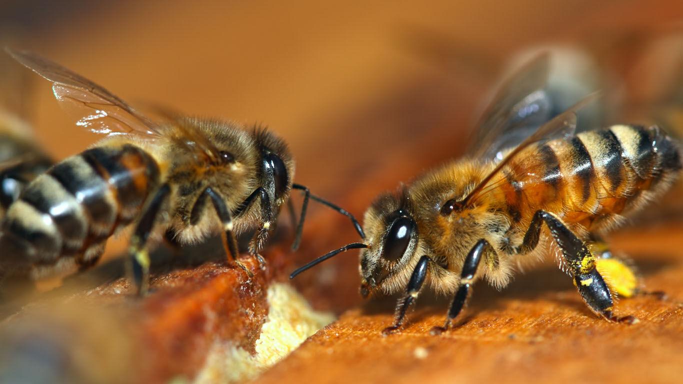 Honig aus eigener Arbeit