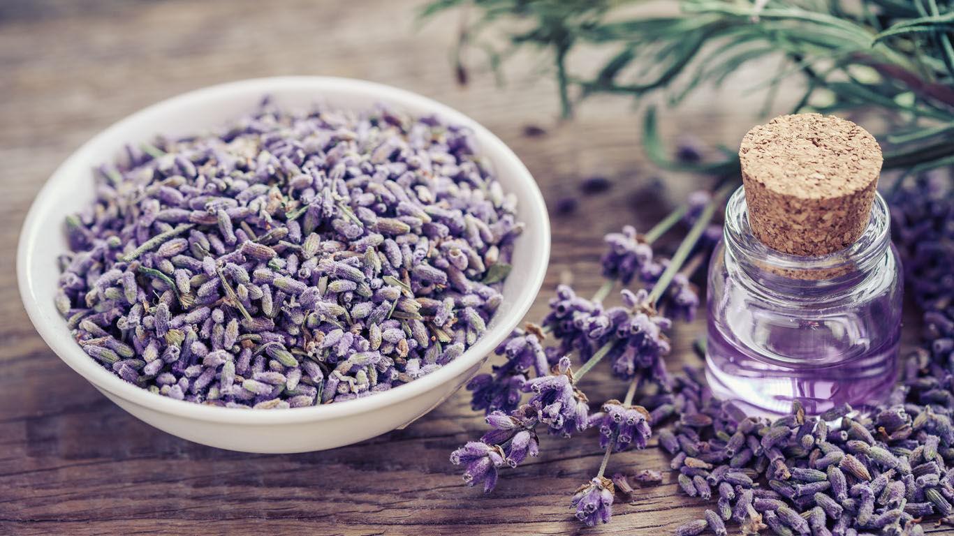 Willst du ätherische Öle selber herstellen, eignet sich beispielsweise Lavendel