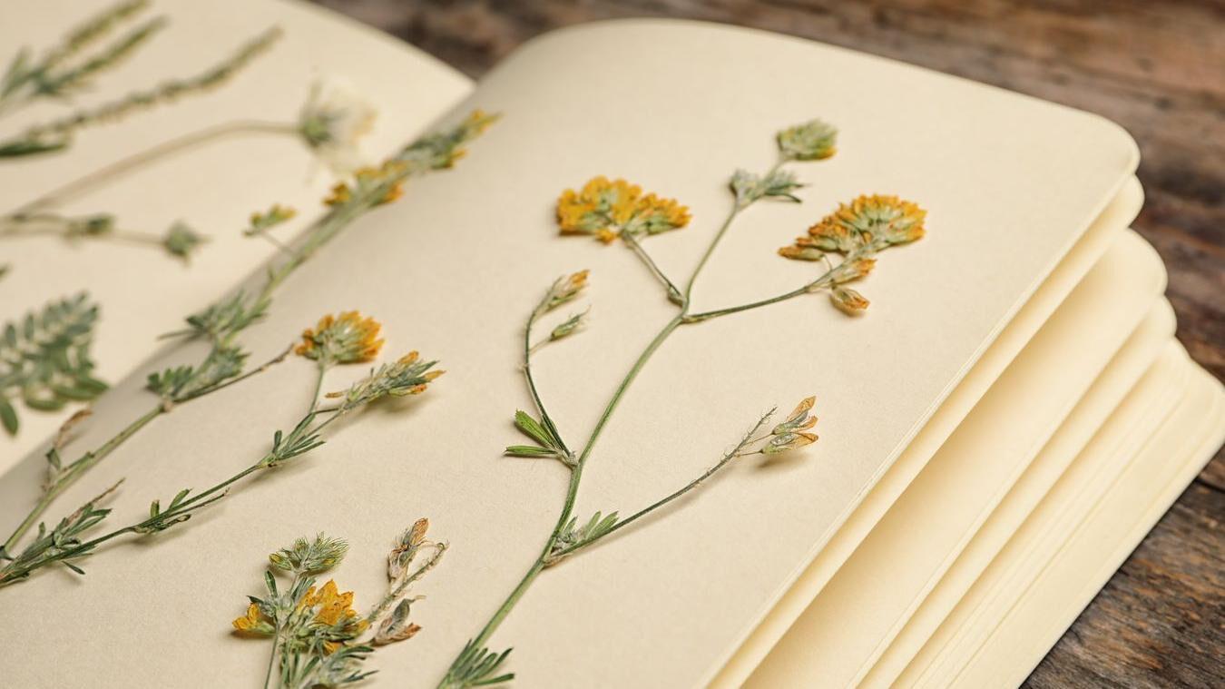 Blumen aus der Pflanzenwelt konservieren