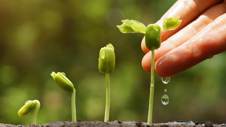 Verschiedene Stadien eines Pflanzensprosses.