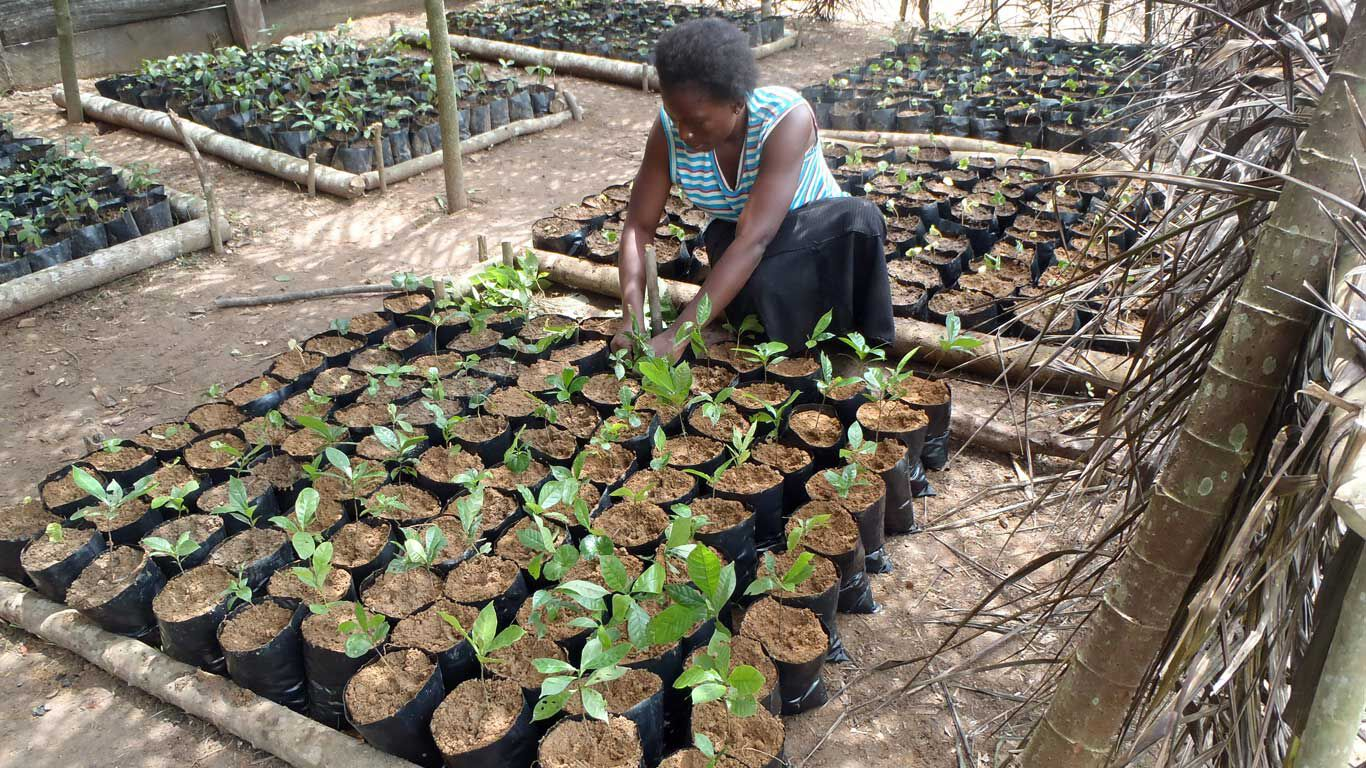 Frau pflanzt Setzlinge zur Wiederaufforstung im Isangi-Territorium