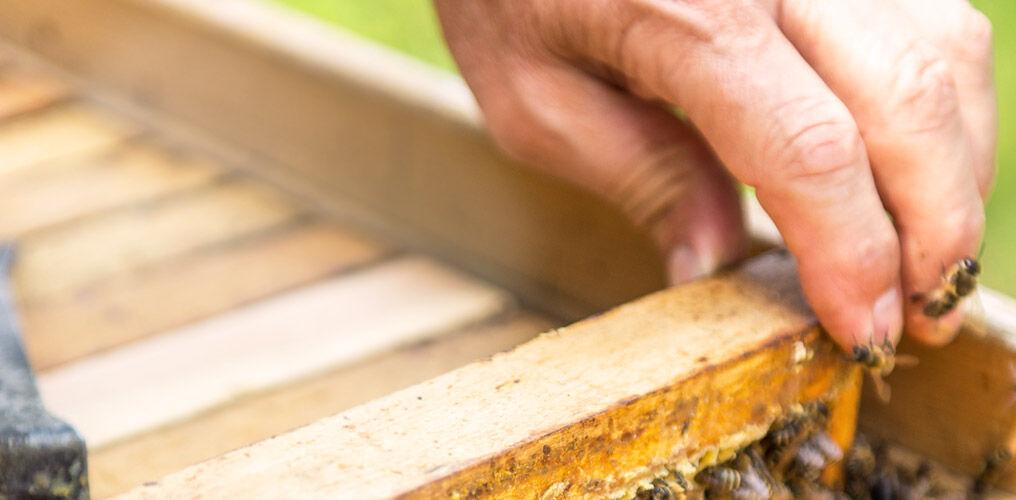Bienenzüchter Sebastian Kneipp