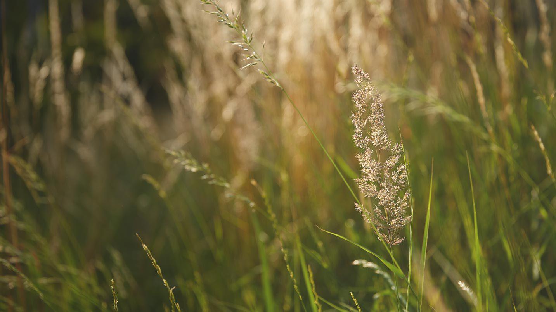 Naturbelassene Wiese in der Sonne