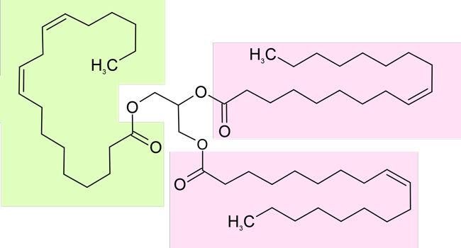 Darstellung für ein Triglycerid in Mandelöl (grün=Linolsäure; rosa=Ölsäure)