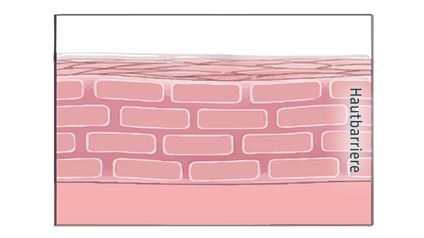 Eine intakte Hautbarriere schützt vor Belastungen aus der Umwelt