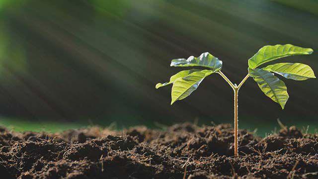 Pflanzen: eine Pflanze wächst aus dem Boden