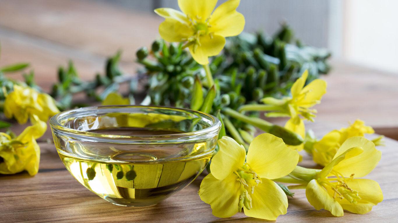 Nachtkerzen-Pflanze neben Nachtkerzenöl in einer Glasschale.