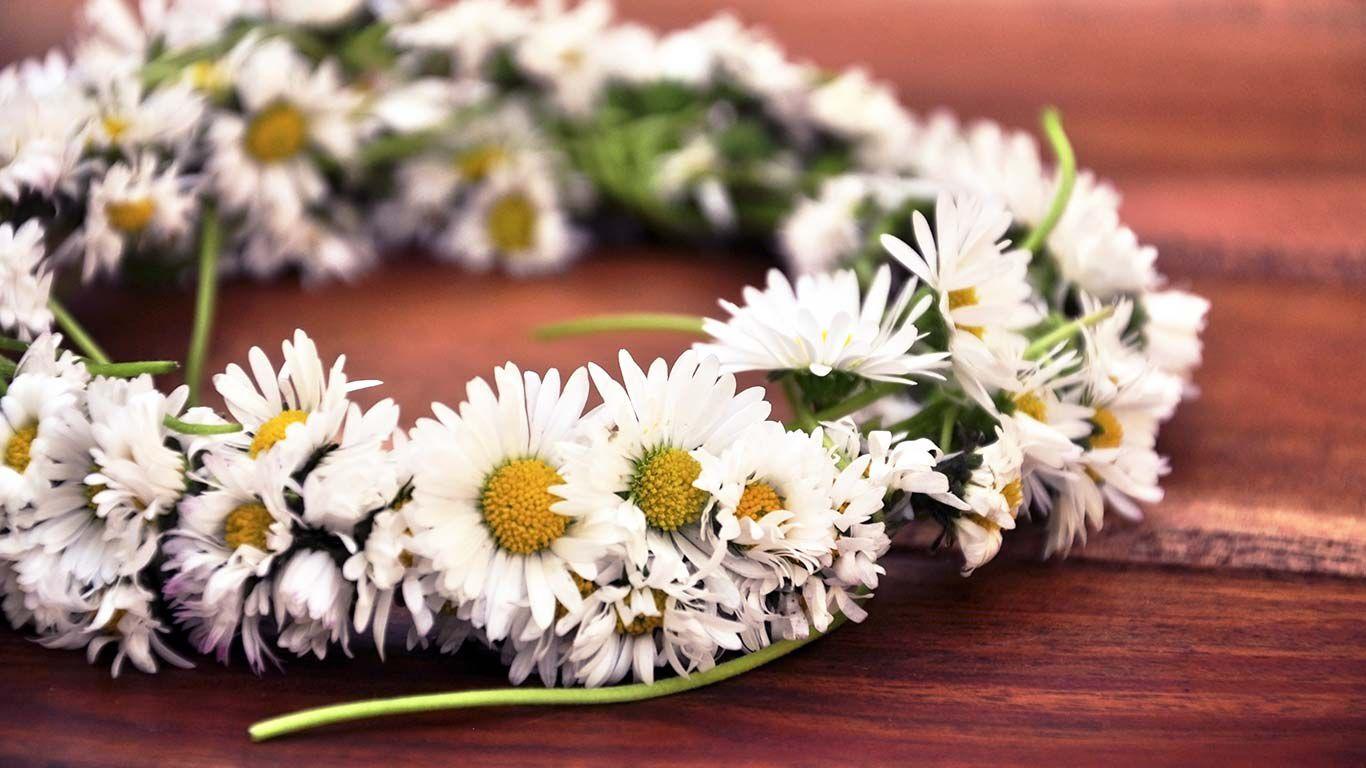 Nahaufnahme eines Gänseblümchen Blumenkranzes auf einem Holztisch liegend.