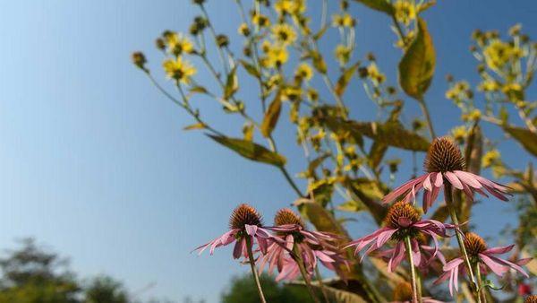 Blumen und Sträucher in der Natur.