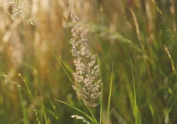 Kneipp setzt für seine Verpackungen nachwachsende Rohstoffe, wie beispielsweise Gras