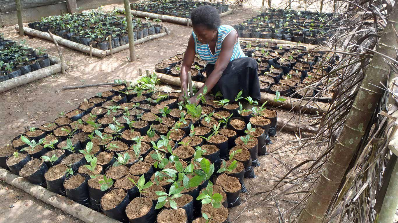 Frau pflanzt Setzlinge zur Wiederaufforstung