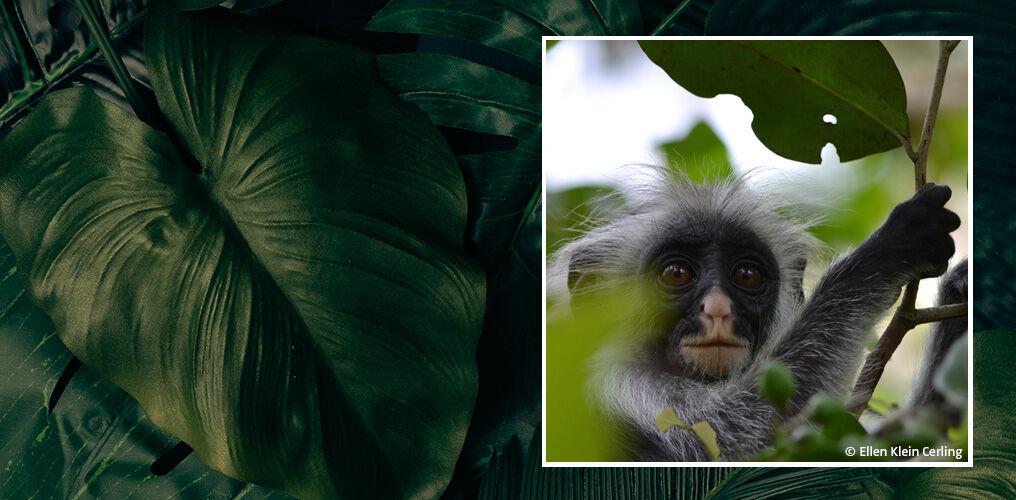 Mit dem WWF den Wald schützen