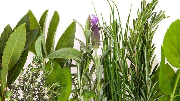 Abbildung verschiedener Pflanzen.