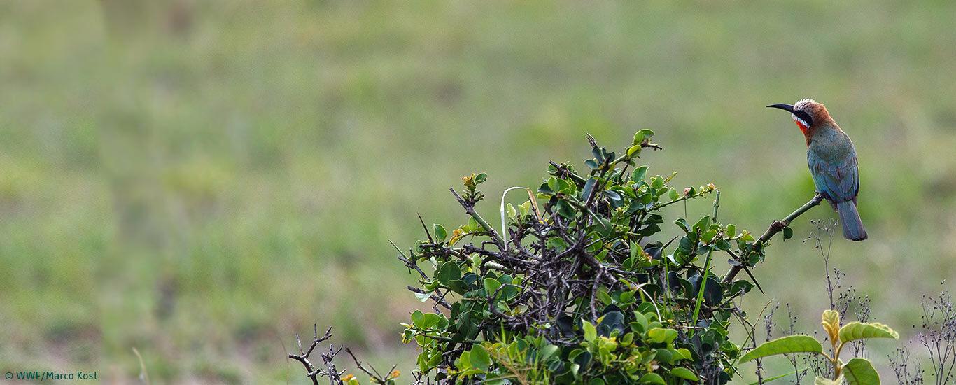 Naturschutzprojekt mit dem WWF