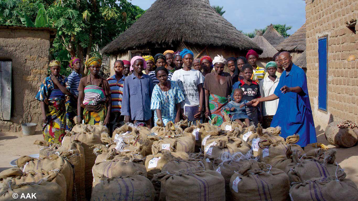 Frauen zeigen stolz ihre Ernte an Shea-Nüssen