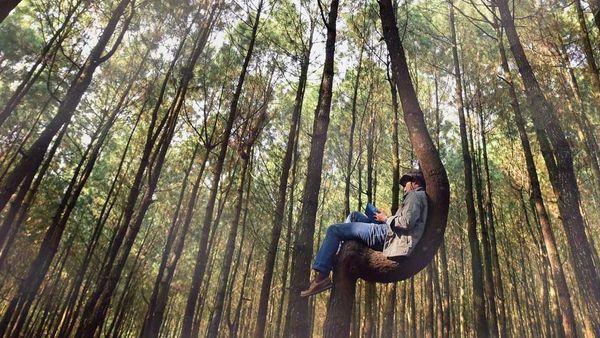 Mann mit Buch sitzt auf einem Baum in Form einer Hängematte.