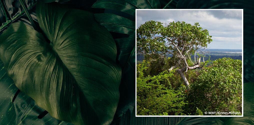 Naturschutz mit dem WWF