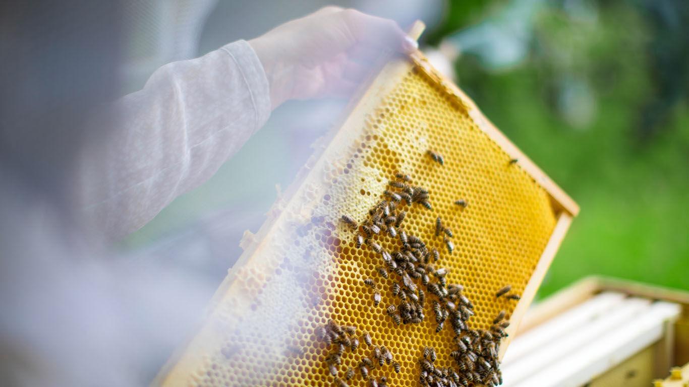 Bienen oder Bienenvolk ablenken