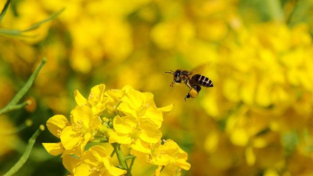 Stadtimkern: Bienen als Hobby