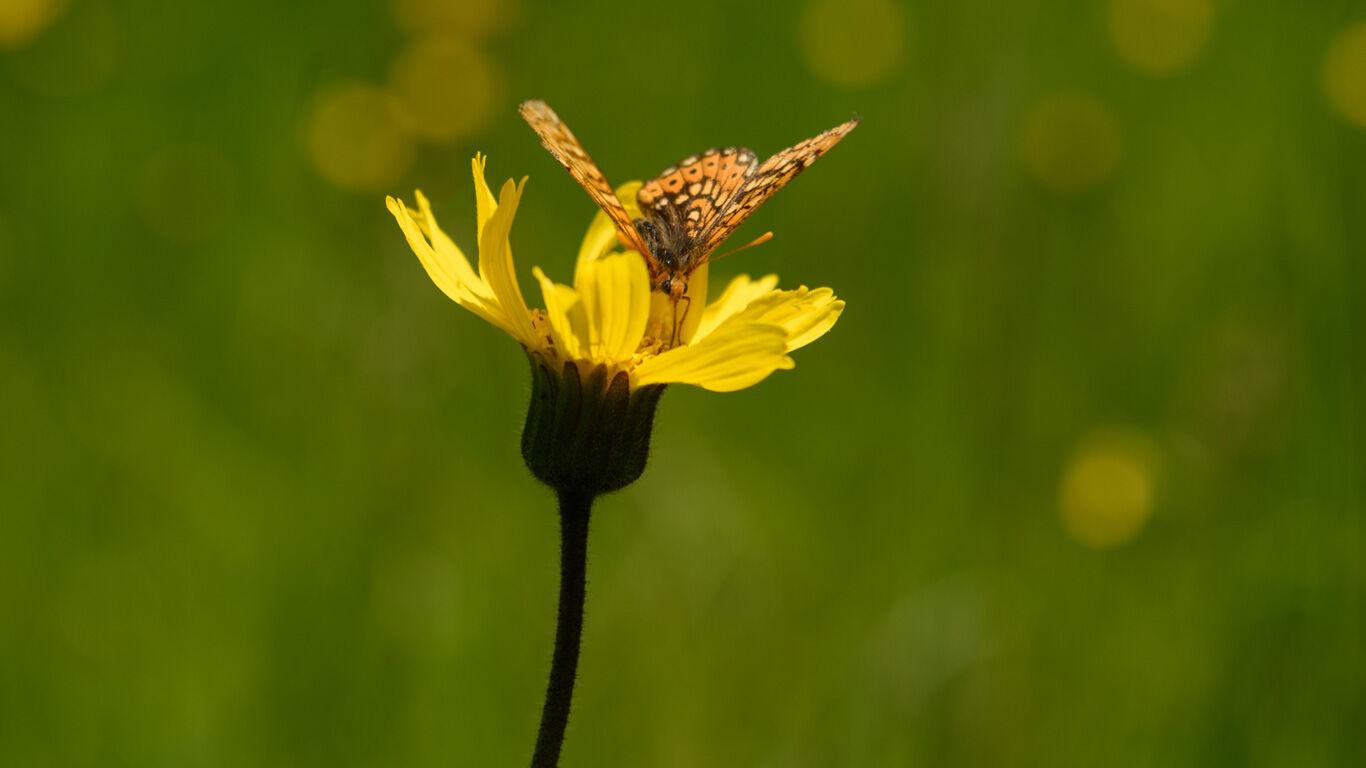Der Schutz der Artenvielfalt ist unser aller Aufgabe