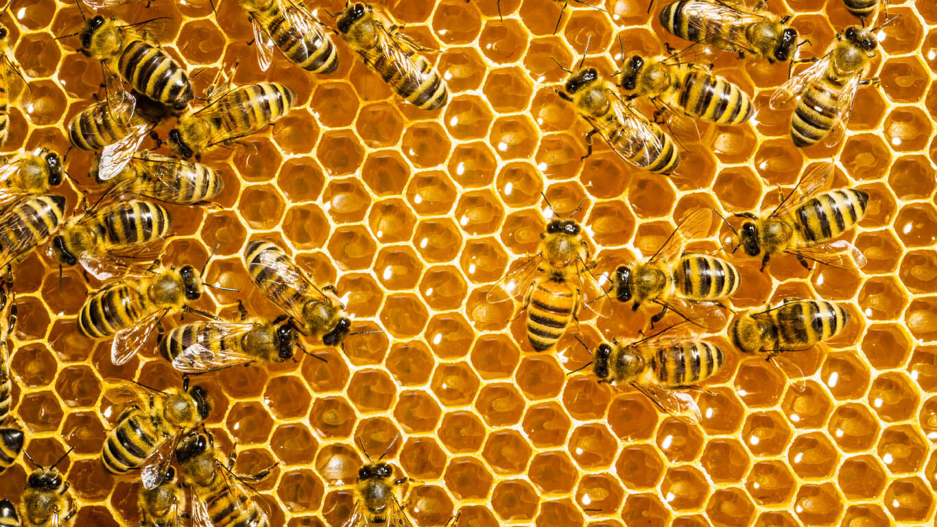 Honig selbst ernten