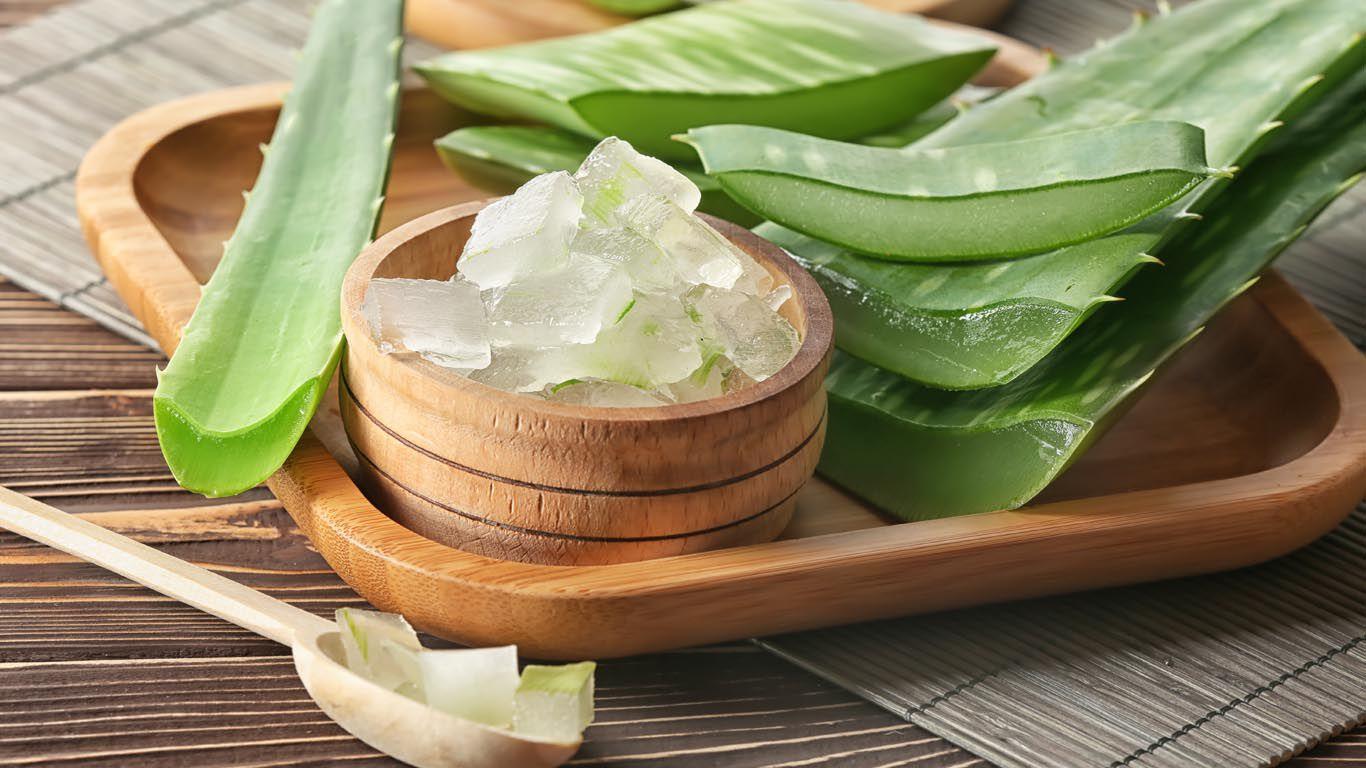 Das dickflüssige Gel der Aloe-Blätter bildet auf der Haut eine feuchtigkeitsspendende, schützende Schicht.