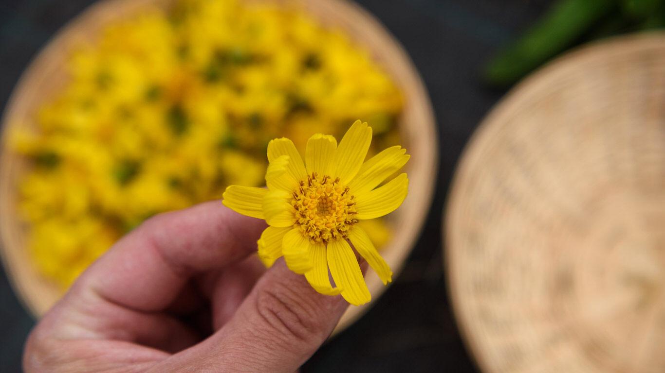 Arnika-Anbau: noch ist die Ernte Handarbeit