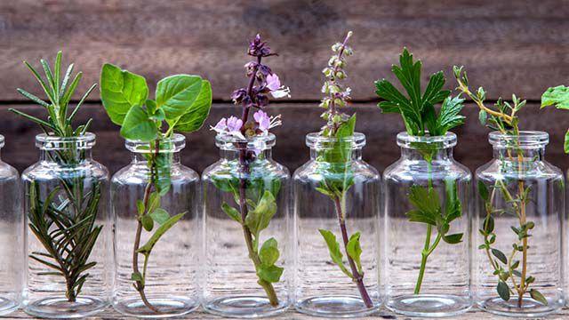 Pflanzen in Gläsern