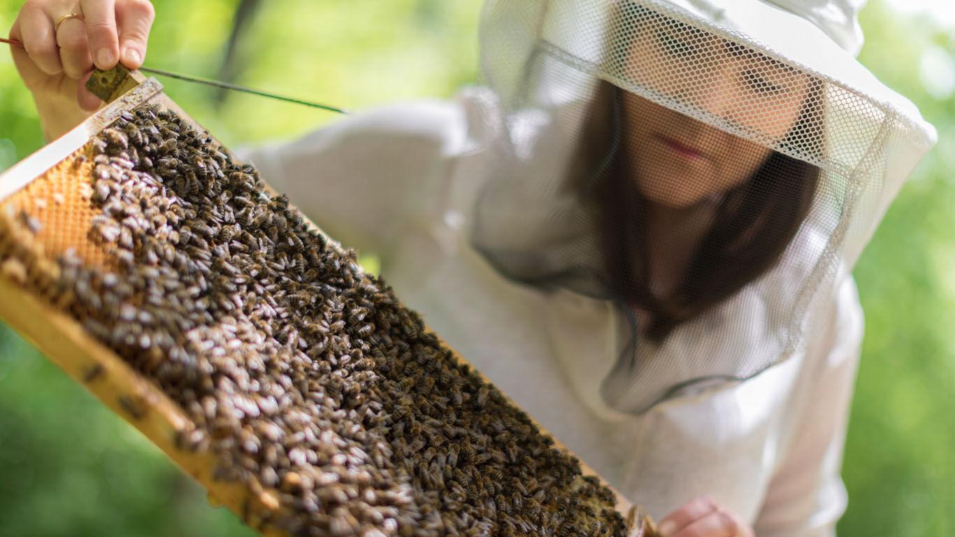 Stadtimker und ihre Bienen