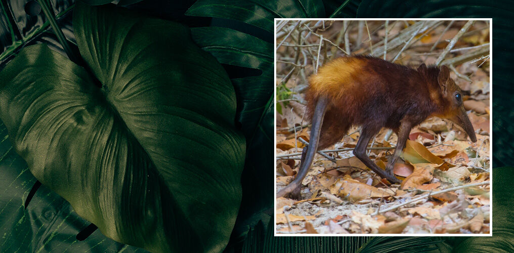Mit dem WWF für den Artenschutz