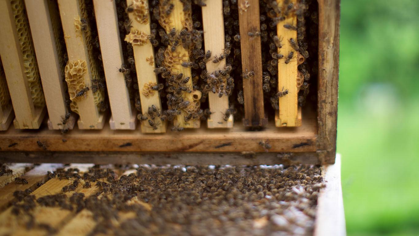 Bienenkasten mit Bienenvolk