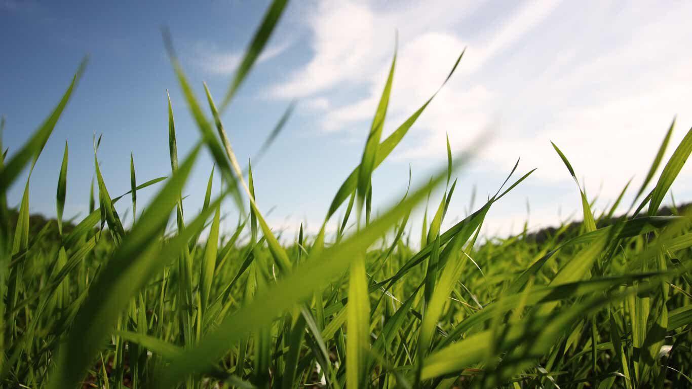 Das Gras für unser Graspapier wird von Ausgleichsflächen in Deutschland gewonnen.