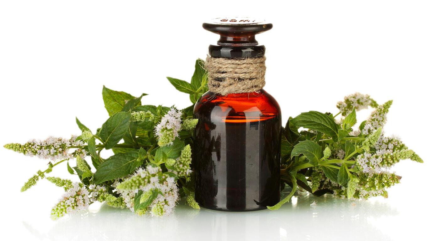 Das ätherische Öl der Ackerminze belebt