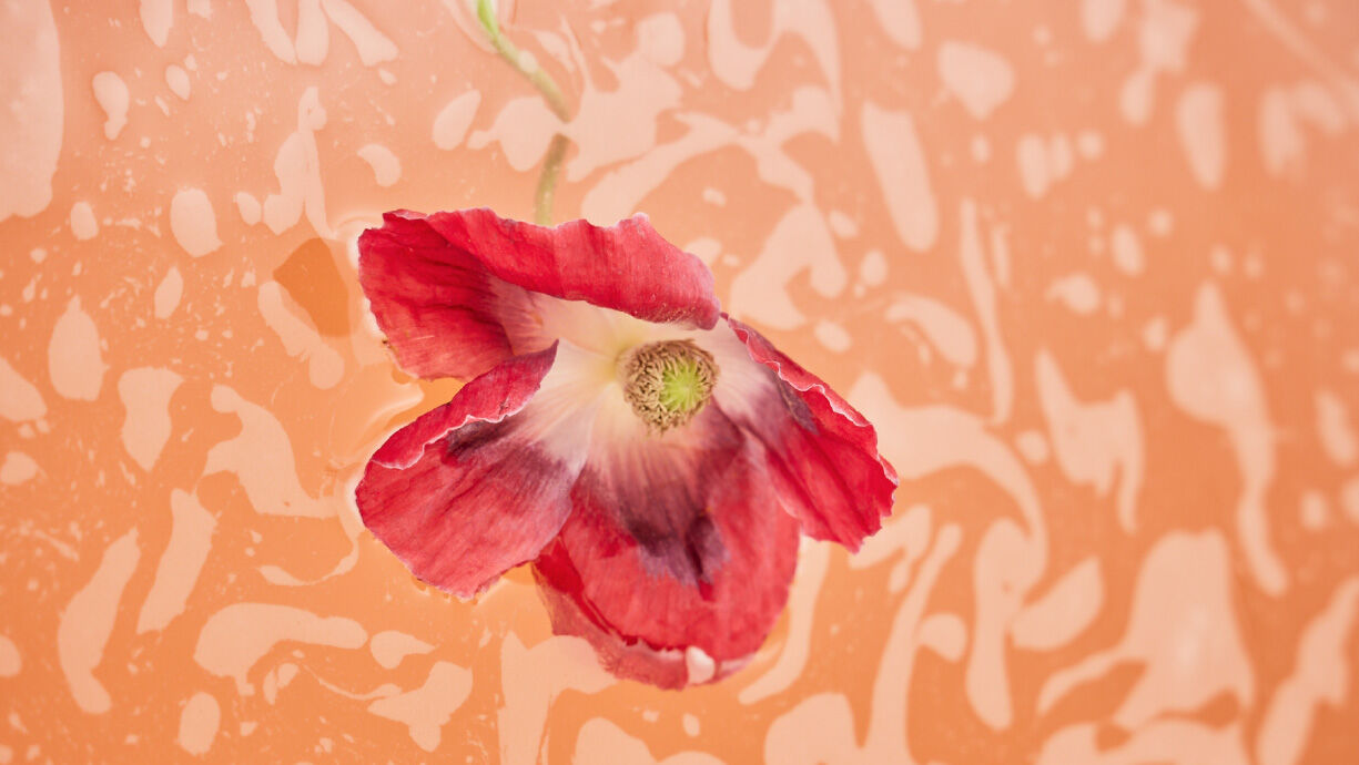 kneipp-website-banner-by-collection-pure-bliss-red-poppy-and-hemp
